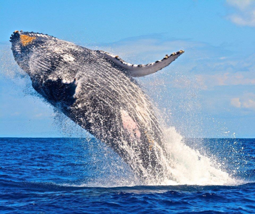 Baleine Madagascar