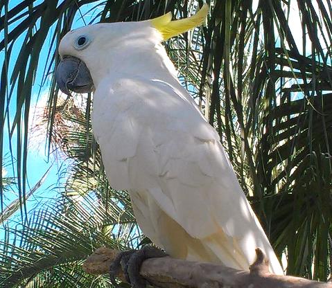 Bali Bird
