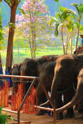 Lampang Elephant Camp IMG_5024