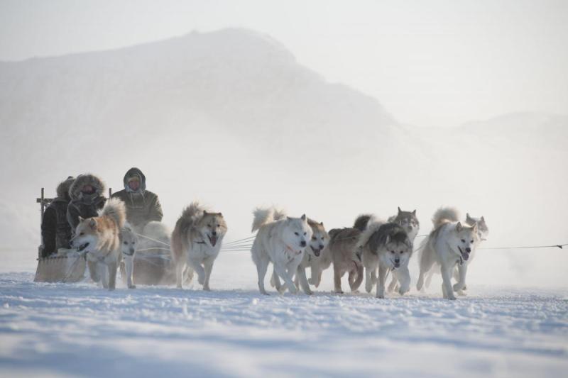 Chien_traineau_Groenland