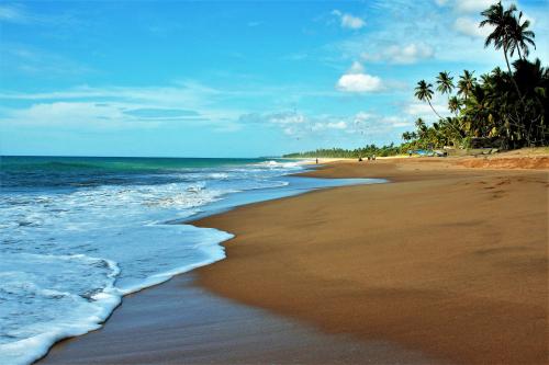 Sri Lanka, plage et palmiers