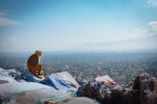Kathmandu, singe