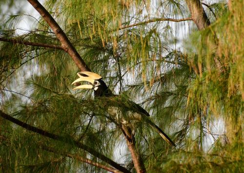 Goldean Buddha, oiseau