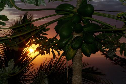 Reunion-island-422970_1920