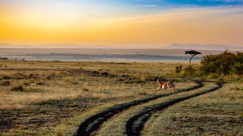 Antelope-4121962_1920