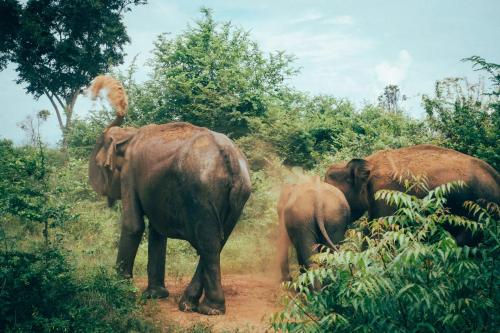 Sri-lanka-4258702_1920